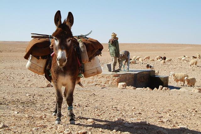 hvilken verdensdel hører tunesien til